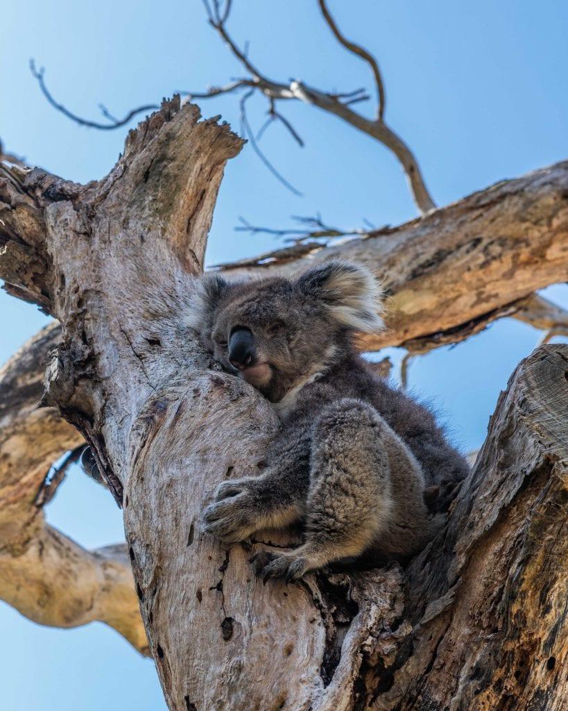 מלבורן-קיינז-סיפור דרך-אוסטרליה