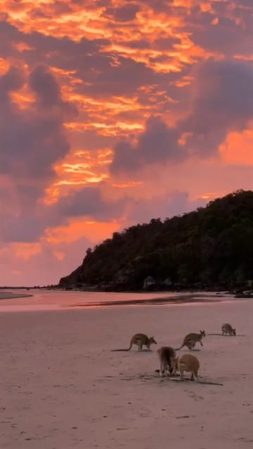 מקאי אוסטרליה Mackay Australia