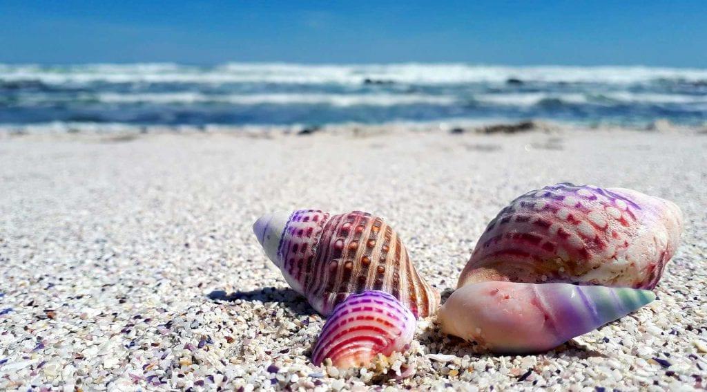 ריינבו ביץ אוסטרליה Rainbow Beach Australia