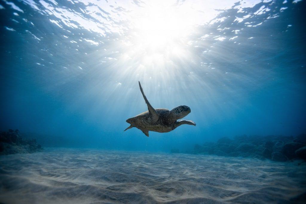 צלילה באוסטרליה